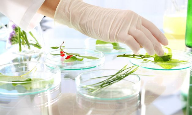 What are the principles of food formulation and related software?